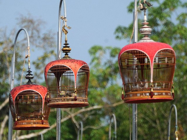 The birds are kept in ornate bamboo cages draped with elaborate and colourful cloths but when the competition begins the cages are hoisted onto hooks suspended around three metres high on the metal grid. (Photo by Madaree Tohlala/AFP Photo)