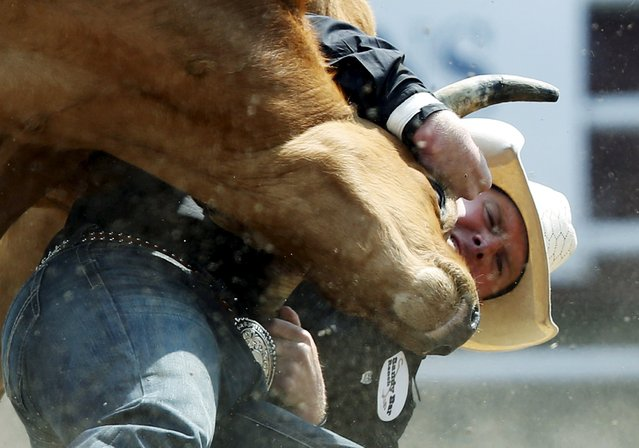 Dustin Walker of Aneroid, Saskatchewan wrestles a steer in the Steer Wrestling event during the Calgary Stampede rodeo in Calgary, Alberta, July 10, 2015. (Photo by Todd Korol/Reuters)