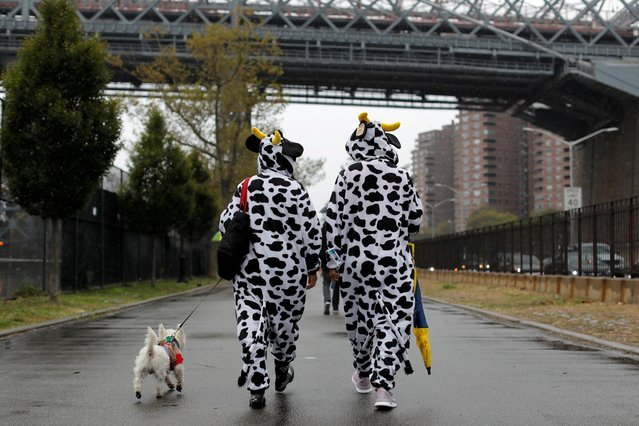 People dressed as cows walk toward the Tompkins Square Halloween Dog Parade in Manhattan, New York City, October 20, 2019. (Photo by Andrew Kelly/Reuters)