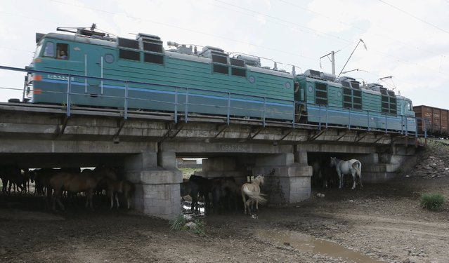 A train moves above horses, which gather in the shade under a bridge, at the southern branch of the Trans-Siberian Railway, with the air temperature at about 30 degrees Celsius (86 degrees Fahrenheit), in the village of Verkhny Askiz, southwest of the city of Abakan, Khakassia region, Russia, July 24, 2015. (Photo by Ilya Naymushin/Reuters)