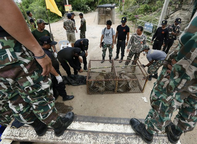 Thai National Park officials move cages filled with monkeys after they were caught for sterilization in a bid to control the birth rate of the monkey population in Hua Hin city, Prachuap Khiri Khan Province, Thailand, 15 July 2017. Thai veterinarians from the Department of National Parks, Wildlife and Plant Conservation launched the program for control the birth rate of the monkey population of Wat Khao Takiab temple are more than three thousand after its causing trouble to villagers and tourists as they visit in the area of the temple. Centered around the areas of the Royal Hua Hin Golf Course, Khao Takiab Temple, and Hin Lek Fai Hill, the monkeys intimidate tourists, steal food from visitors and restaurants, and cause damage to houses. The program run between 14 to 20 July 2017, the officials said. (Photo by Narong Sangnak/EPA/EFE)