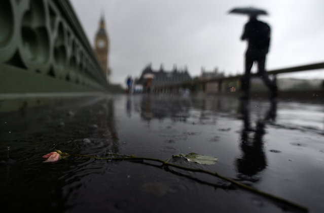 A man walks past a flower in a puddle next to newly installed security barriers on a wet and windy morning on Westminster Bridge, in London, Britain, June 6, 2017. (Photo by Clodagh Kilcoyne/Reuters)