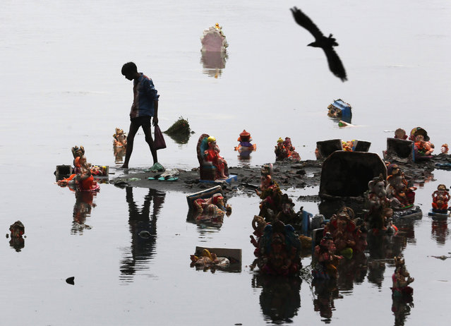 A boy collects items thrown by devotees as religious offerings next to idols of the Hindu elephant god Ganesh, the deity of prosperity, a day after they were immersed in the waters of the Sabarmati river in the western Indian city of Ahmedabad September 9, 2014. (Photo by Amit Dave/Reuters)