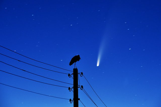 A stork stands on a power lines pillar as the comet C/2020 F3 (NEOWISE) is seen in the sky above the village of Kreva, some 100 km northwest of Minsk, early on July 13, 2020. (Photo by Sergei Gapon/AFP Photo)