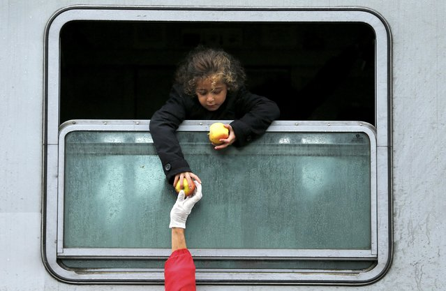 A migrant child leans out of a train window to collect food at the railway station in Tovarnik, Croatia September 29, 2015. (Photo by Antonio Bronica/Reuters)