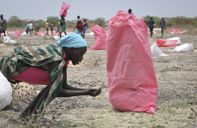 In this photo taken Wednesday, May 2, 2018, a woman scoops fallen sorghum grain off the ground after an aerial food drop by the World Food Program (WFP) in the town of Kandak, South Sudan.  Five years into South Sudan's civil war more than seven million people are facing severe hunger without food aid, according to the latest analysis by the U.N. and the government. (Photo by Sam Mednick/AP Photo)