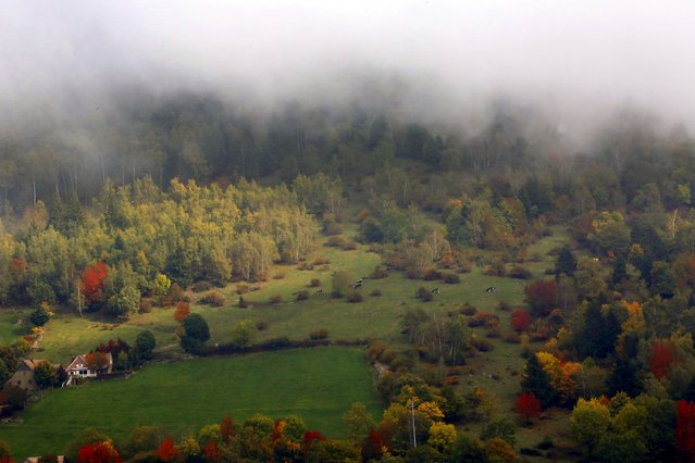 Late autumn colours marking a change in season in the Vosges mountains are seen in the Alsace region, Eastern France, October 11, 2015. (Photo by Jacky Naegelen/Reuters)