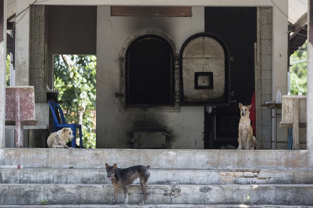 Dogs are seen at a crematorium at the former tsunami victims identification centre near Ban Nam Khem, in Phang Nga province, December 15, 2014. (Photo by Damir Sagolj/Reuters)