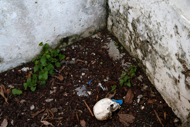 A skull is above the ground at a cemetery after Hurricane Matthew hit Jeremie, Haiti, October 18, 2016. (Photo by Carlos Garcia Rawlins/Reuters)