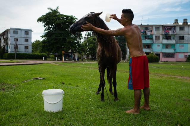 Alexi Pupo, 23, was born in this apartment complex called, Panel 2, in La Fe, Cuba on August 8, 2015. The land was once an American military base. He is bathing his horse, El Tremendo, which he uses for transportation with a cart. La Fe, is a town that was founded by U.S. citizens and originally named Santa Fe. (Photo by Sarah L. Voisin/The Washington Post)