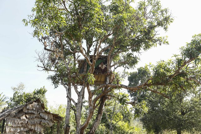 A villager sits in his tree house, as he takes cover from wild elephants, in Gwe Cho village, Shwe Taung Yan township Ayeyarwady division January 18, 2016. (Photo by Soe Zeya Tun/Reuters)