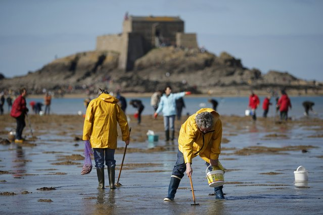 People dig for shellfish during a record low tide in Saint Malo, western France, March 21, 2015. (Photo by Stephane Mahe/Reuters)
