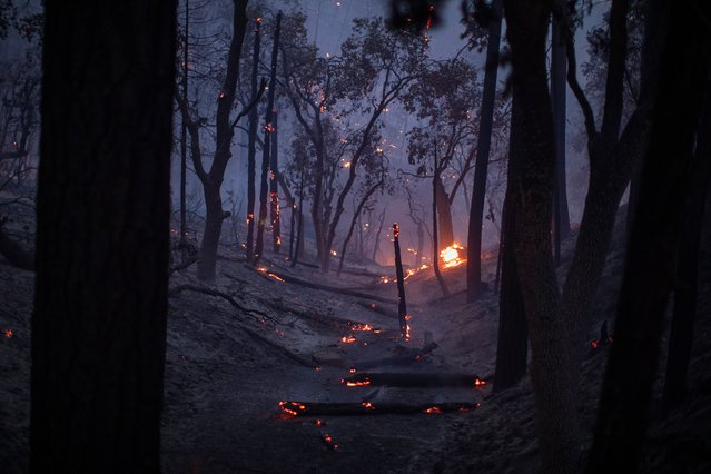 A freshly burned landscape is seen as the French Fire continues to spread on August 25, 2021 near Wofford Heights, California. The 20,000-plus acre French Fire, which began on August 18 grew today, burning some structures along the way. (Photo by David McNew/Getty Images)