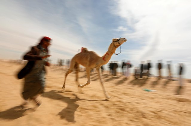 A Bedouin breeder runs beside a robot jockey riding a camel during the 18th International Camel Racing festival at the Sarabium desert in Ismailia, Egypt, March 12, 2019. (Photo by Amr Abdallah Dalsh/Reuters)