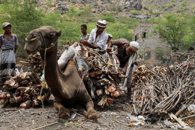 Vendors unload firewood bundles from the back of a camel at a market in Khamis Banisaad district of al-Mahweet province, Yemen, June 10, 2021. (Photo by Khaled Abdullah/Reuters)