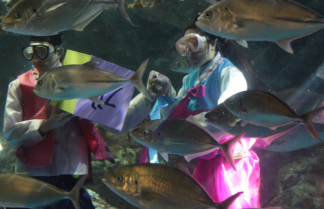 "People wear traditional costume ""HanBok"" and swim with fish celebrating the upcoming Lunar New Year at 63 city Aquarium on January 26, 2014 in Seoul, South Korea. The Lunar New Year on January 31 is the biggest holiday day in South Korea. (Photo by Chung Sung-Jun/Getty Images)"