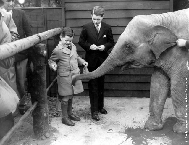 Giving sugar to the baby elephant, 1938