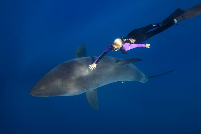 Ocean Ramsey freediving with a shark. (Photo by Juan Oliphant/Caters News)