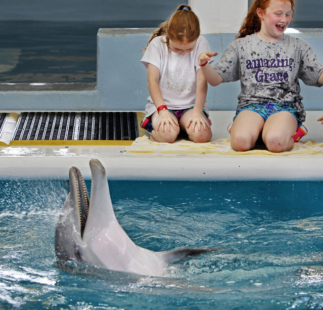 Grace White, left, and her sister Sophia White react after getting splashed by Hope, who seems to nbe laughing, at the Clearwater Marine Aquarium Monday, may 18, 2015. Grace White, 7 years old from Fayetteville, NC suffers from DIPG, a form of pediatric brain cancer. She celebrated her 7th birthday on May 17 and visited the Clearwater Marine Aquarium (CMA) Monday, May 18. (Photo by Jim Damaske/The Tampa Bay Times via AP Photo)