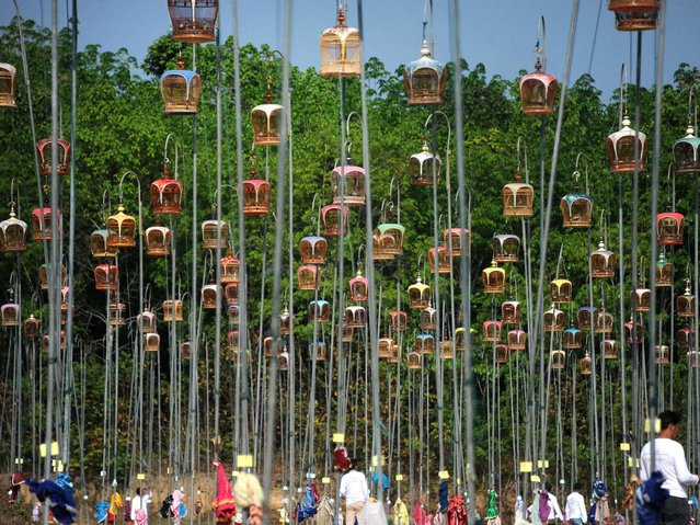 Hanging bird cages are displayed on poles during a bird-singing contest in the Rueso district in Thailand's southern province of Narathiwat on March 23, 2014. Hundreds of bird owners from Thailand, Malaysia and Singapore took part in the traditional contest held every year. (Photo by Madaree Tohlala/AFP Photo)