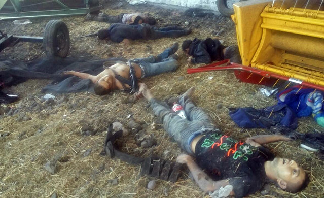 The bodies of men who authorities say were suspected cartel gunman lie next to farm equipment at the Rancho del Sol, near Ecuanduero, in western Mexico, Friday, May 22, 2015. At least 43 people died Friday in what authorities described as a fierce, three-hour gunbattle between federal forces and suspected drug gang gunmen at the ranch. (Photo by Oscar Pantoja Segundo/AP Photo)
