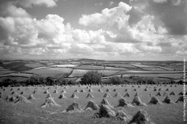 1935: A general view of a Cornish cornfield