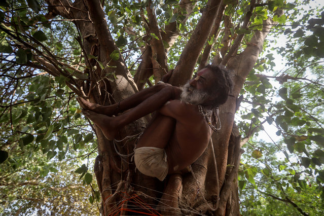 A Sadhu or Hindu holy man performs yoga on a tree ahead of International Yoga Day on the banks of the river Ganges in Prayagraj, India on June 17, 2019. (Photo by Jitendra Prakash/Reuters)