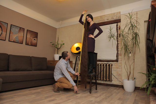 Aliia Nasyrova standing on a chair with her husband measuring her hair on March 5, 2017 in Riga, Latvia. (Photo by  Eduard Kolik/Barcroft Media)