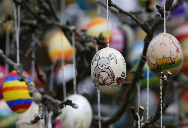Easter eggs adorn an apple tree in the garden of the summerhouse of German pensioners Christa and Volker Kraft, in the eastern German town of Saalfeld, March 19, 2014. Each year since 1965 Volker and his wife Christa spend up to two weeks decorating the tree with their collection of 10,000 colourful hand-painted Easter eggs in time for Easter celebrations. (Photo by Fabrizio Bensch/Reuters)