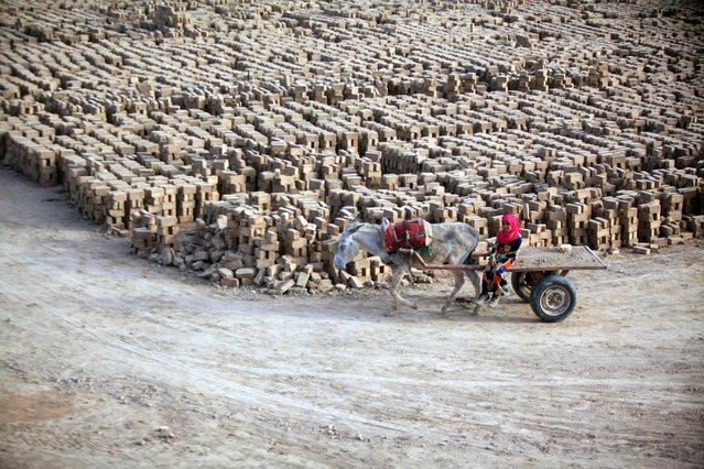 An Iraqi girl rides a donkey-drawn cart at a brick factory near the central Iraqi shrine city of Najaf on May 16, 2017. (Photo by Haidar Hamdani/AFP Photo)