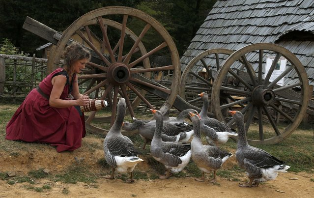 A woman plays with gooses at the construction site of the Chateau de Guedelon near Treigny in the Burgundy region of France, September 13, 2016. The Guedelon castle is a typical French medieval chateau-fort being built using the techniques, materials and rules of the 13th Century, and has been in construction since June 1997 when the first stone was laid. (Photo by Jacky Naegelen/Reuters)