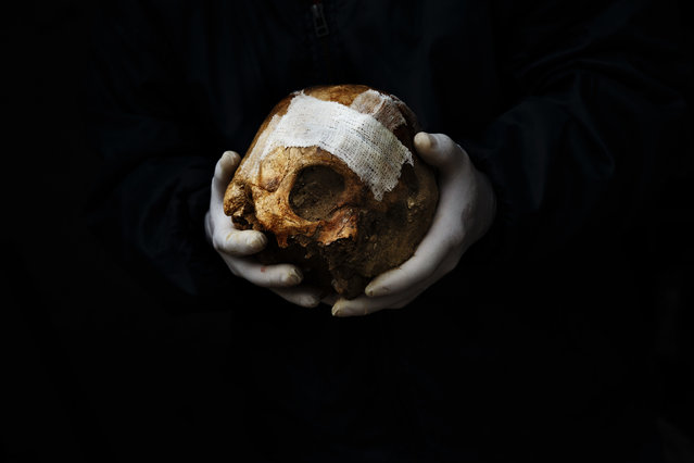 In this photo taken on December 16, 2014, a volunteer holds a repaired skull before placing it inside a box during an exhumation of a mass grave at the cemetery of Puerto Real, Spain. (Photo by Daniel Ochoa de Olza/AP Photo)
