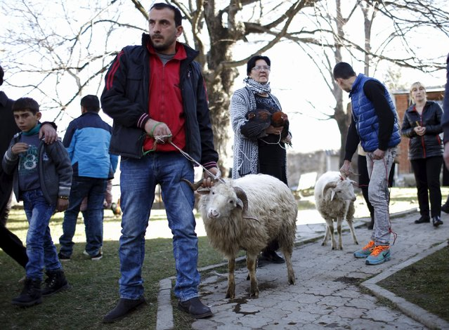 People stand with sheep for sacrifice outside a church during St. George's Day celebration in the village of Ikalto, Georgia, November 23, 2015. (Photo by David Mdzinarishvili/Reuters)