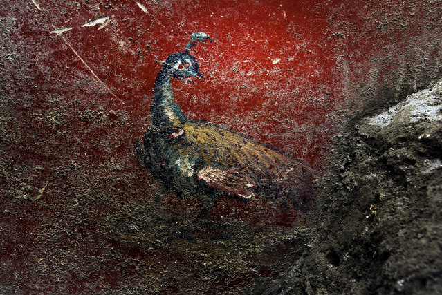 A newly excavated peacock mural at the Roman archaeological site in Pompeii, Italy on May 21, 2018. (Photo by Fotogramma/IPA/Rex Features/Shutterstock)