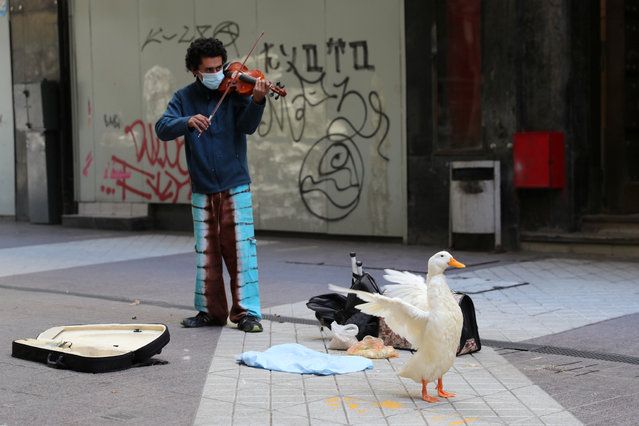 A man plays violin next to a duck on a pedestrian street during the coronavirus disease (COVID-19) pandemic, in Santiago, Chile on April 12, 2021. (Photo by Ivan Alvarado/Reuters)
