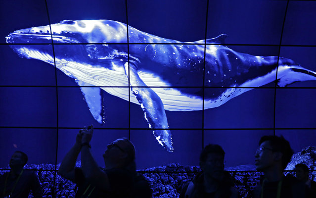 Attendees walk through an exhibit of LG OLED 4K TVs at the LG booth during CES International, Thursday, January 5, 2017, in Las Vegas. (Photo by John Locher/AP Photo)