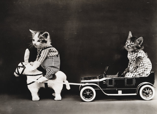 Photograph shows two kittens wearing clothes with a toy horse or mule pulling a broken down toy car, 1914. (Photo by Harry Whittier Frees/Library of Congress)
