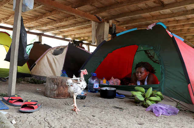 A migrant rests in her tent at an improvised shelter for Africans and Haitians on their way to the U.S., in the community of Canaan Membrillo, in Darien province, Panama, April 4, 2019. (Photo by Erick Marciscano/Reuters)