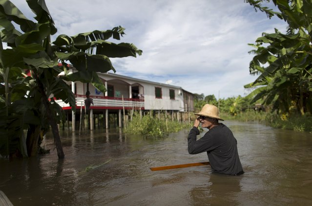 Brazilian farmer Onilton de Oliveira Maciel is seen in his banana plantation which is inundated with floodwaters from the Solimoes River, in the rural municipality of Manacapuru, Amazonas state May 5, 2015. According to the association of farmers in the community, about 70 percent of the agricultural production was lost due to the flooding. (Photo by Bruno Kelly/Reuters)
