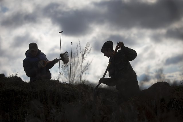 In this photo taken Saturday, May 2, 2015, members of an excavation team searching for the remains of Soviet soldiers killed during WWII, dig former trenches trying to find remains of Soviet soldiers near the village of Gaitolovo, 60 km (37 miles) east of  St. Petersburg, Russia. (Photo by Dmitry Lovetsky/AP Photo)