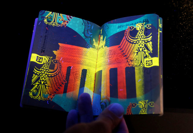 The new German electronic passport is pictured under an ultraviolet light during its presentation to the media in Berlin, Germany, February 23, 2017. (Photo by Fabrizio Bensch/Reuters)