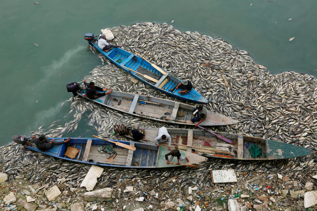 Iraqi workers in boats remove the floating dead fish from water near fish farms at the Euphrates River in Mussayab district, Iraq on November 3, 2018. (Photo by Alaa al-Marjani/Reuters)