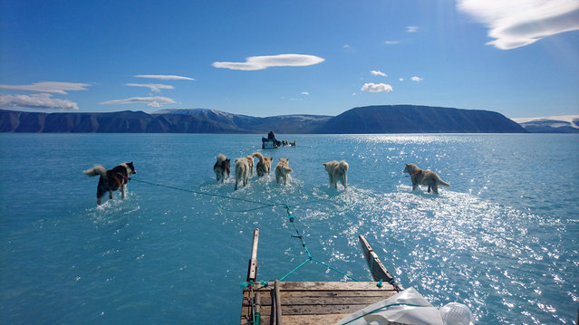 Sled dogs make their way in northwest Greenland on June 15, 2019 with their paws in melted ice water. Over the weekend, this picture taken by Danish climate researchers showing sled dogs on the ice in northwest Greenland with their paws in melted ice water was widely shared on social media. Greenland's ice melting season normally runs from June to August but the Danish Meteorological Institute said this year's melting started on April 30, the second-earliest time on record going back to 1980. (Photo by Steffen M. Olsen/Danmarks Meteorologiske Institut/AP Photo)