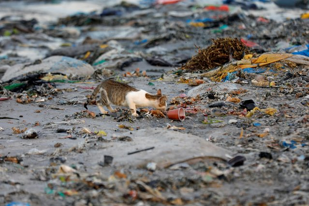 A cat is pictured among plastic waste at a fishermen port on the outskirts of Dakar, Senegal on July 26, 2019. (Photo by Zohra Bensemra/Reuters)