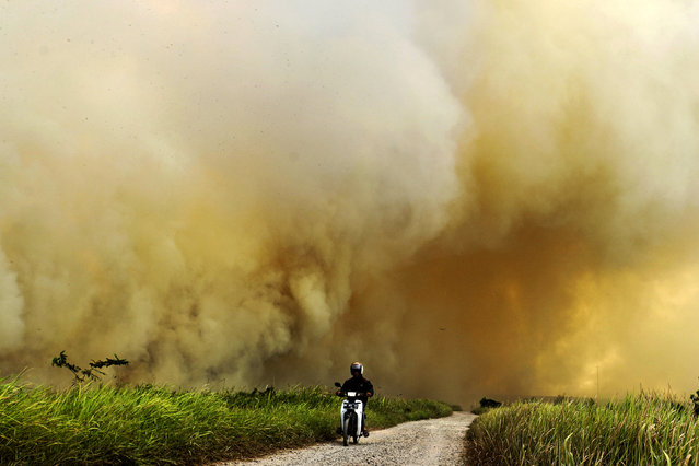 A man rides his motorcycle past a wild fire on peat land in Ogan Ilir, South Sumatra Province, Indonesia, 05 August 2019. According to media reports, Indonesian authorities deployed thosands of fire fighters and security force to control the wild fire as six provinces declare a state of emergency. (Photo by Muhammad Fajri/EPA/EFE)
