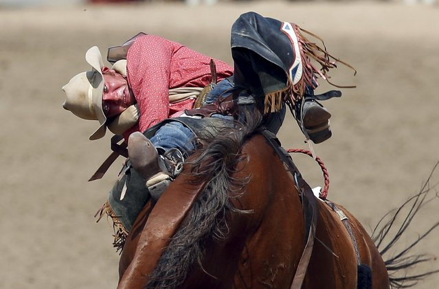Will Lowe of Canyon, Texas hangs on to the horse Sourdough in the Bareback event during the Calgary Stampede rodeo in Calgary, Alberta, July 10, 2015. (Photo by Todd Korol/Reuters)