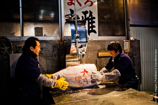 Workers use an electric saw to cut a frozen Tuna fish, purchased at the morning Tuna auction, at the Tsukiji fish market