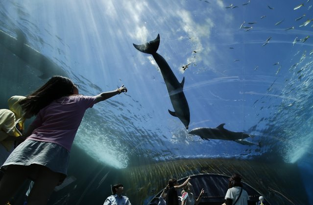 Bottlenose dolphins swim over visitors in water tank at the Hakkeijima Sea Paradise aquarium-amusement park complex in Yokohama, southwest of Tokyo, Tuesday, July 21, 2015. Temperatures in Tokyo's metropolitan area neared around 96 degree Fahrenheit, or 35 degree Celsius, on Tuesday. (Photo by Shuji Kajiyama/AP Photo)