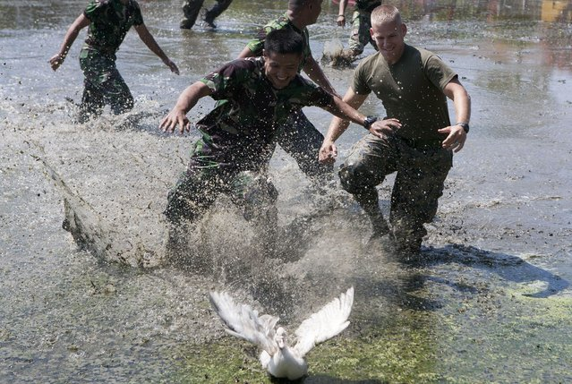 US marines and their Indonesian counterparts compete in chasing ducks following a joint US and Indonesia military exercise in Sidoarjo, eastern Java island, on September 13, 2014. The ten-day 2014 Marines Tactical Warfare Simulation (MTWS), taking place from September 9 and 18, is being attended by 66 military personnel from both countries as part of military and disaster response cooperations. (Photo by Juni Kriswanto/AFP Photo)