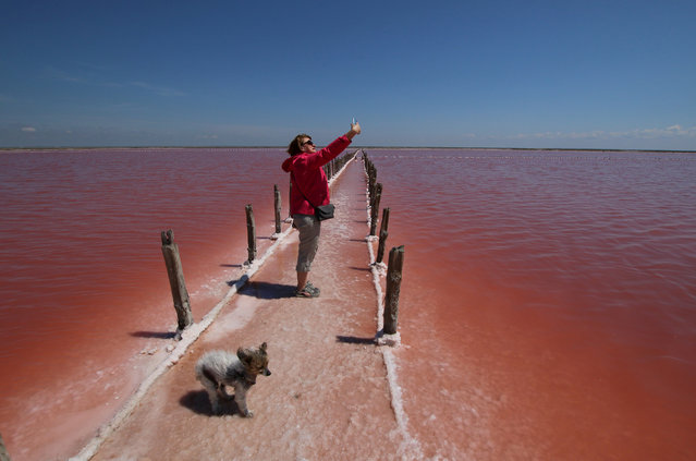 A woman takes a selfie at a salt production site on the bed of a drained area of the Sasyk-Sivash lake near the city of Yevpatoria, Crimea on May 31, 2020. (Photo by Alexey Pavlishak/Reuters)